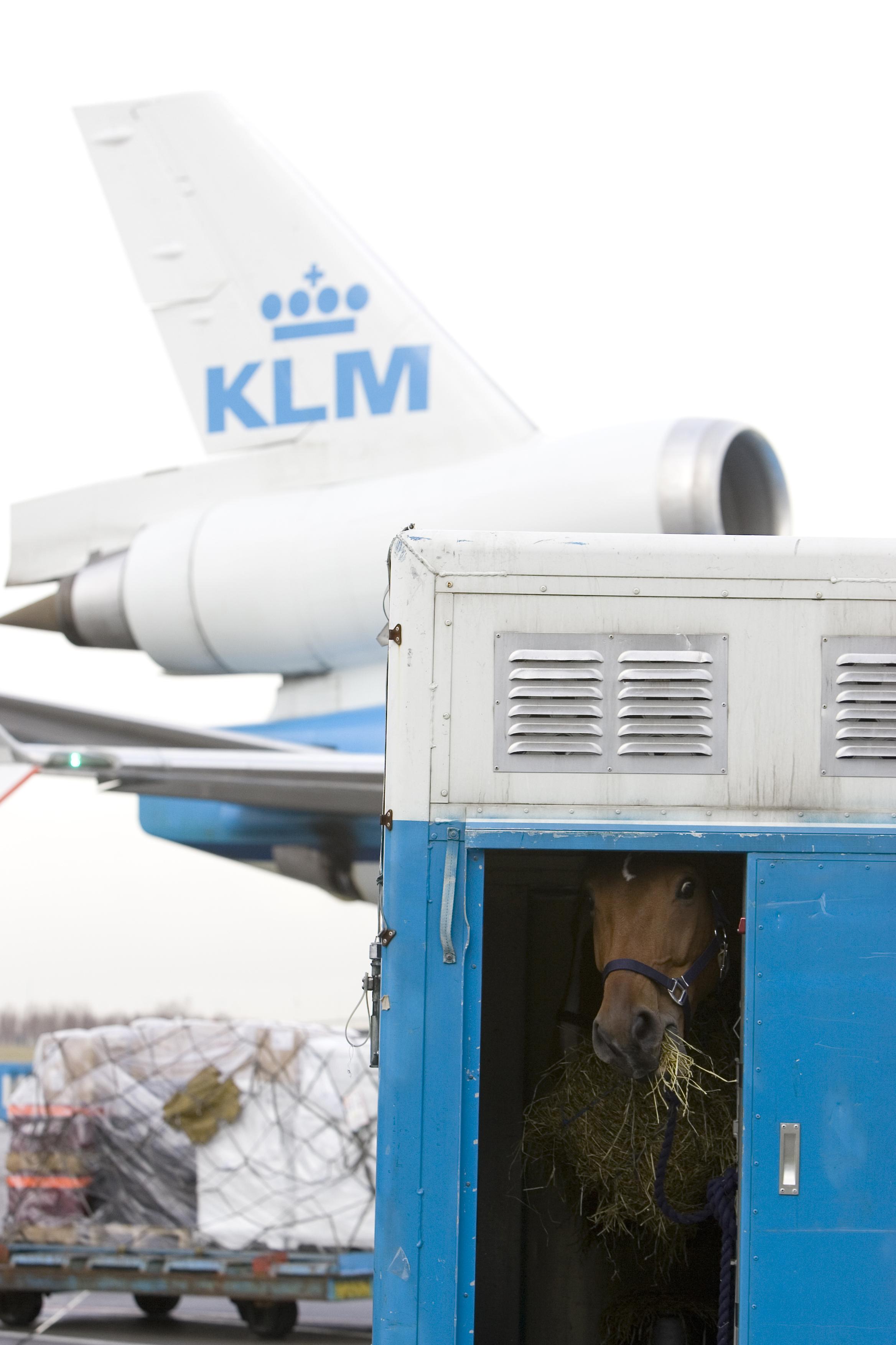 Gallery :: Kevin Roesch International Worldwide Horse Transport